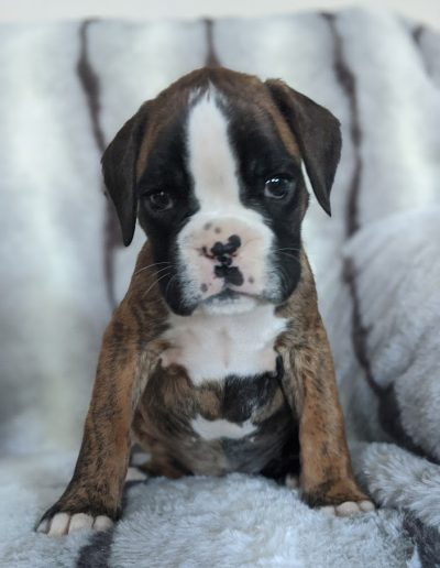 Layla - Available